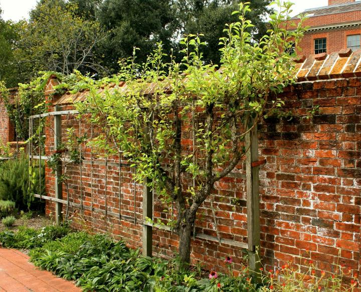 แนะนำปลูกต้นไม้ติดกำแพง